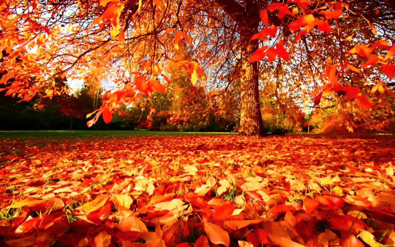 Autumn-Wallpaper-autumn-35867786-1280-800